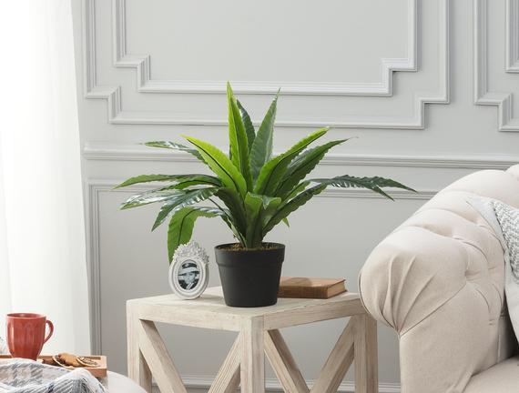 Vierge Saksılı Çiçek - Yeşil