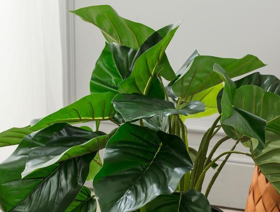 Lansquine Saksılı Çiçek - Yeşil