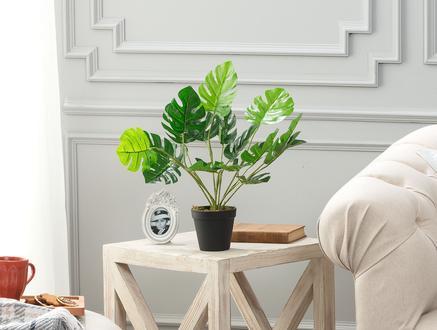 Bouleau Saksılı Çiçek - Yeşil