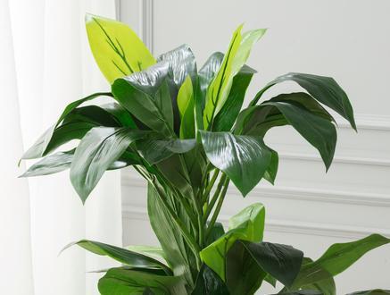 Geranium Saksılı Çiçek - Yeşil