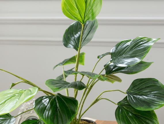 Verdure Saksılı Çiçek - Yeşil