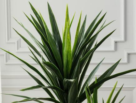 Buisson Saksılı Çiçek - Yeşil