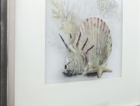 Coquillage Deniz Kabuğu Tablo